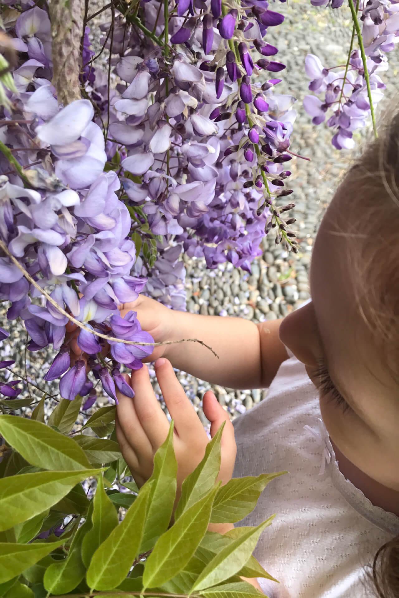 Criança a tocar e sentir as flores lilás. Chão de calçada típica madeirense.