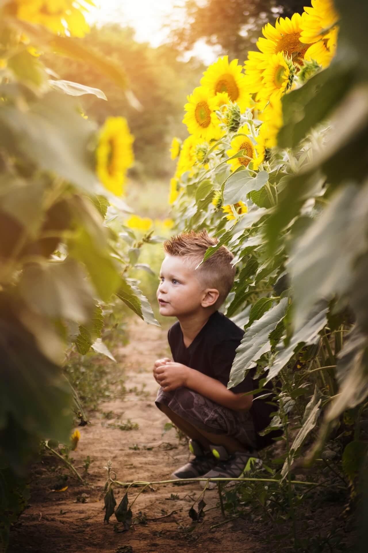 Criança de cócoras numa plantação de girassóis.