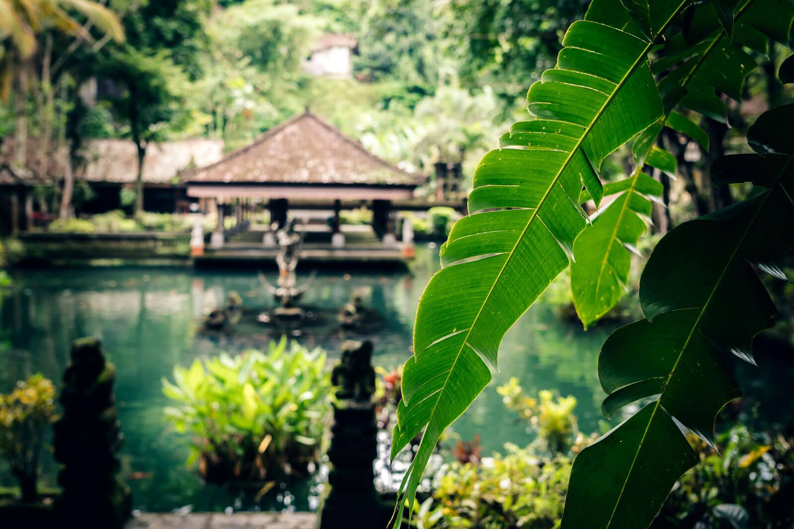 Parque tropical na ilha de Bali, Indonésia, o local ideal para o Generative Retreat